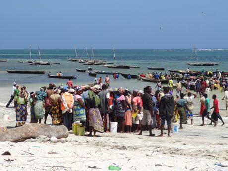 Scramble for fish, Mayungu, Kenya's North coast © Patrick Kimani