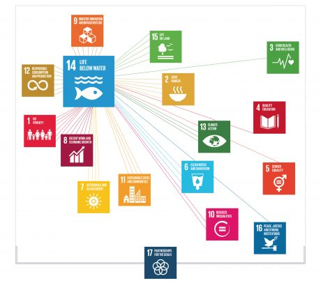 Interlinkages between SDG 14 and other SDGs © IASS